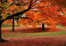 The Fall Foliage Season Will Be Delayed, According to Experts