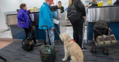 Ask yourself these questions before flying with your dog or cat