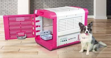 Delta Launches Innovative Solution for Pet Travel